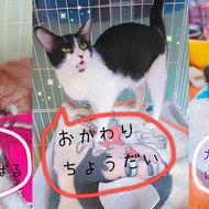 御礼メッセージ:Cats'チャリティ播磨 さんより サムネイル画像