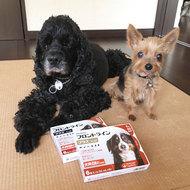 御礼メッセージ:Angel dog & Love cat様(栃木県)より サムネイル画像