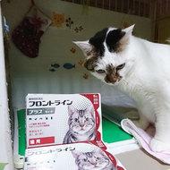 御礼メッセージ:NPOフライングタイガース様(東京都)より サムネイル画像