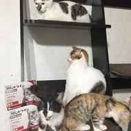 御礼メッセージ:猫部はなはた@なちゅら様(東京都)より サムネイル画像