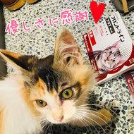 御礼メッセージ:sao様(鹿児島県)より サムネイル画像