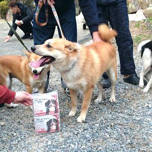 御礼メッセージ:うみねこ 宇美町 動物愛護団体様(福岡県)より サムネイル画像