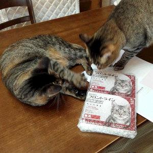 御礼メッセージ:動物保護団体Cramp様(福岡県・佐賀県)より サムネイル画像