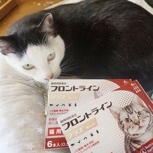 御礼メッセージ:NPO法人ねりまねこ様(東京都)より サムネイル画像