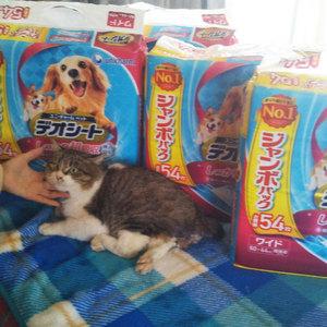 御礼メッセージ:しっぽちゃんのおうち様(福島県)より サムネイル画像