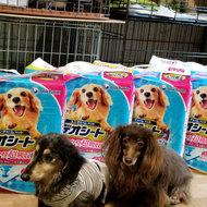 御礼メッセージ:動物愛護団体happysmile様(福岡県)より サムネイル画像