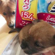 御礼メッセージ:STEP☆Dog&Cat様(広島県)より サムネイル画像