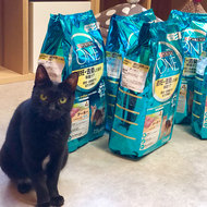御礼メッセージ:保護猫カフェ ネコリパブリック東京 お茶の水店様(東京都)より サムネイル画像