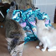 御礼メッセージ:NPO法人 青い鳥動物愛護会さん(山口県)より サムネイル画像