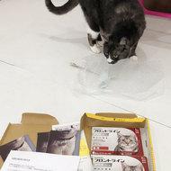 御礼メッセージ:peace cat (ピースキャット)様(福岡県)より サムネイル画像