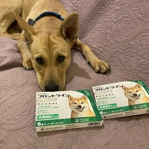 御礼メッセージ:チャコまま@Dog is LOVE様(茨城県)より/ 第23回 サムネイル画像