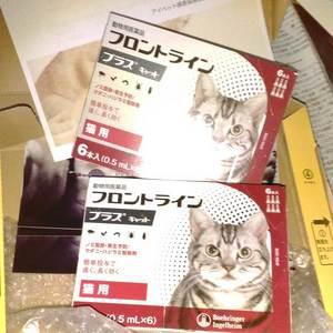 御礼メッセージ:ローカルキャットの会 仔猫担当様(東京都)より/ 第21回 サムネイル画像