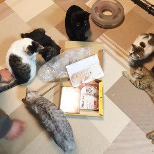 御礼メッセージ:わせだつるまき猫の家様(東京都)より/ 第25回 サムネイル画像