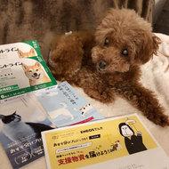 御礼メッセージ:特定非営利活動法人pooch dog rescue様(神奈川県)より/ 第26回 サムネイル画像