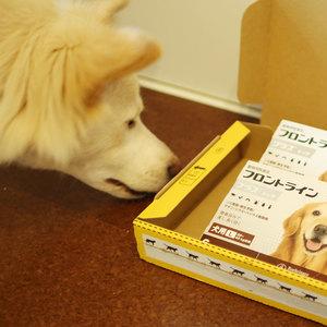 御礼メッセージ:Animal Aid Circle Dog-Nuts様(埼玉県)より/ 第32回 サムネイル画像