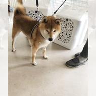 御礼メッセージ:ボランティア団体 犬のM基金 様(北海道)より/ 第33回 サムネイル画像