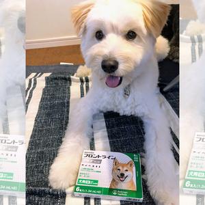 御礼メッセージ:特定非営利活動法人 保健所の成犬・猫の譲渡を推進する会 様(東京都)より/ 第32回 サムネイル画像