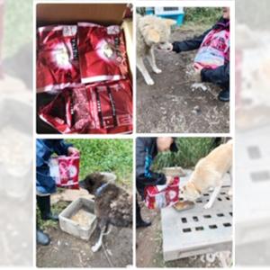 御礼メッセージ: ボランティア団体 犬のM基金 様(北海道)より/ 第34回 サムネイル画像