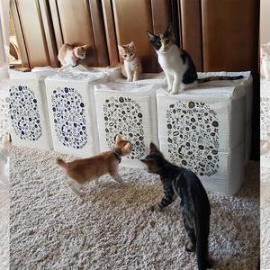 御礼メッセージ: 猫の未来とびら 様(東京都)より/ 第36回 サムネイル画像