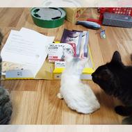 御礼メッセージ:呉の猫ボラ 様(広島県)より/ 第38回 サムネイル画像