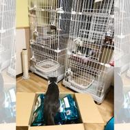 御礼メッセージ: NPO法人 猫の森様(千葉県)より/ 第37回 サムネイル画像