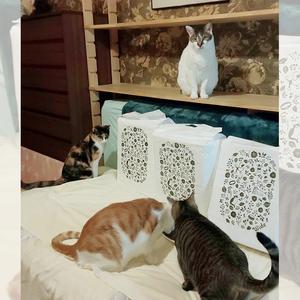 御礼メッセージ:みなとねこ(東京都港区の主婦らによる地域猫ボランティア) 様(東京都)より/ 第39回 サムネイル画像