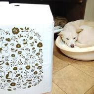 御礼メッセージ: BERRY'S DOG<RYU> 様(福岡県)より/ 第39回 サムネイル画像