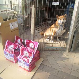 御礼メッセージ: NPO法人 茨城県・犬猫共存推進会 様(茨城県)より/ 第40回 サムネイル画像