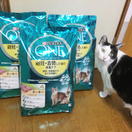 御礼メッセージ: プーちゃん家の猫達と地域猫 様(愛知県)より/ 第40回 サムネイル画像