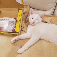 御礼メッセージ:catdogaid 様(山口県)より/ 第41回 サムネイル画像