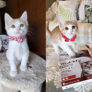御礼メッセージ:猫の未来とびら 様(東京都)より/ 第44回 サムネイル画像