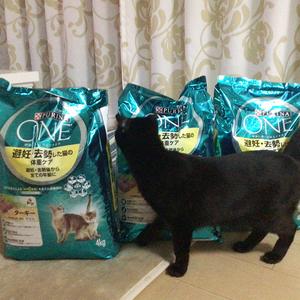 御礼メッセージ: cat first 様(大阪府)より/ 第43回 サムネイル画像