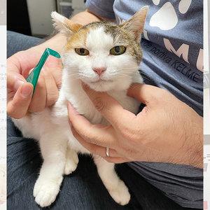御礼メッセージ:猫にゃんネットワーク府中 様(東京都)より/ 第47回 サムネイル画像