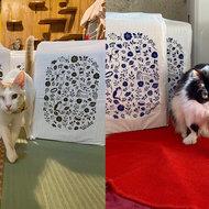 御礼メッセージ:保護猫カフェ ネコリパブリック東京 お茶の水 様(東京都)より/ 第48回 サムネイル画像