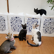 御礼メッセージ:猫の未来とびら 様(東京都)より/ 第48回 サムネイル画像