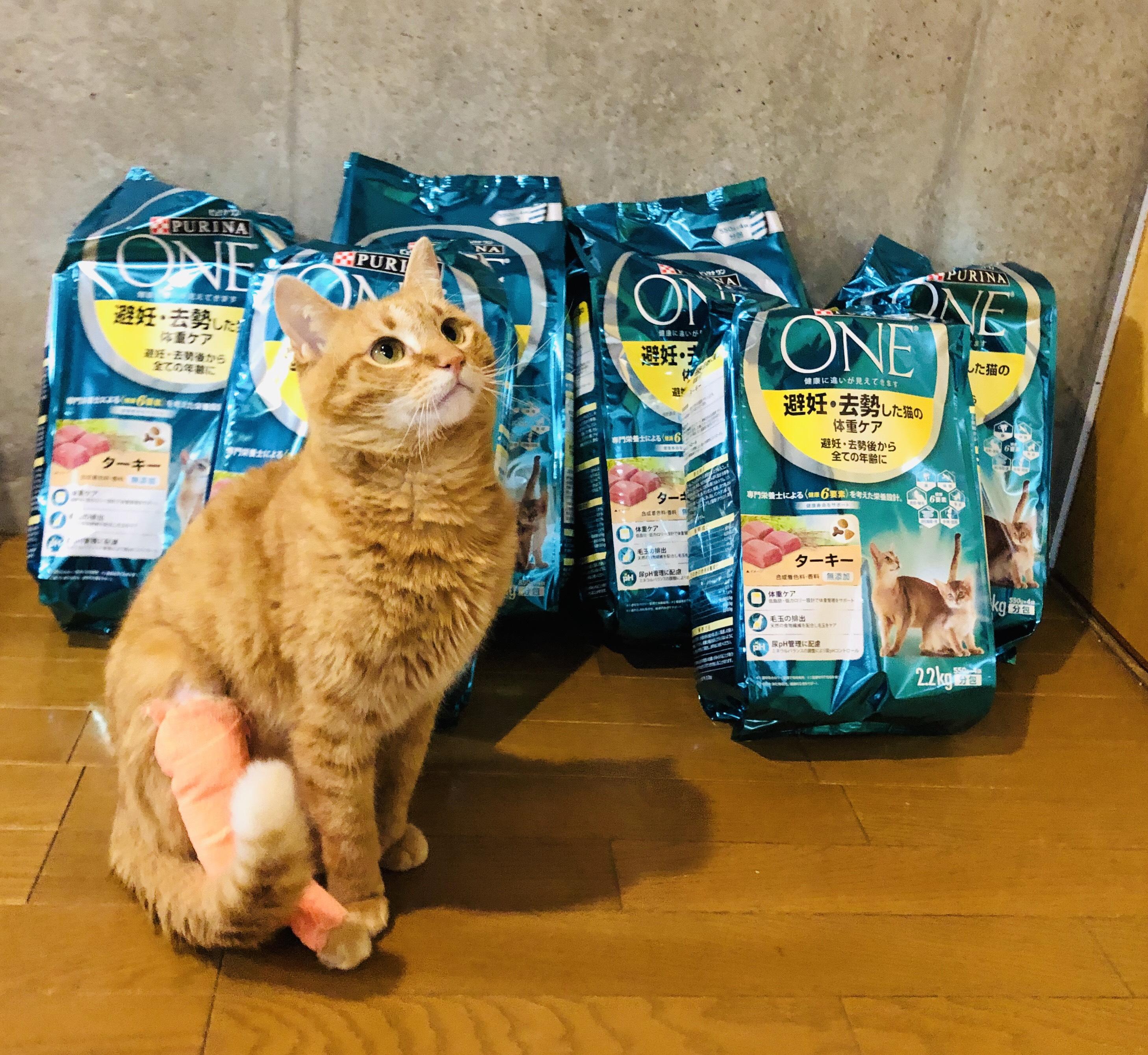 こいけ2_保護猫.jpeg