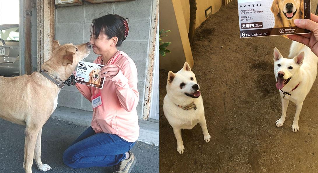 なべしま_保護犬.jpg