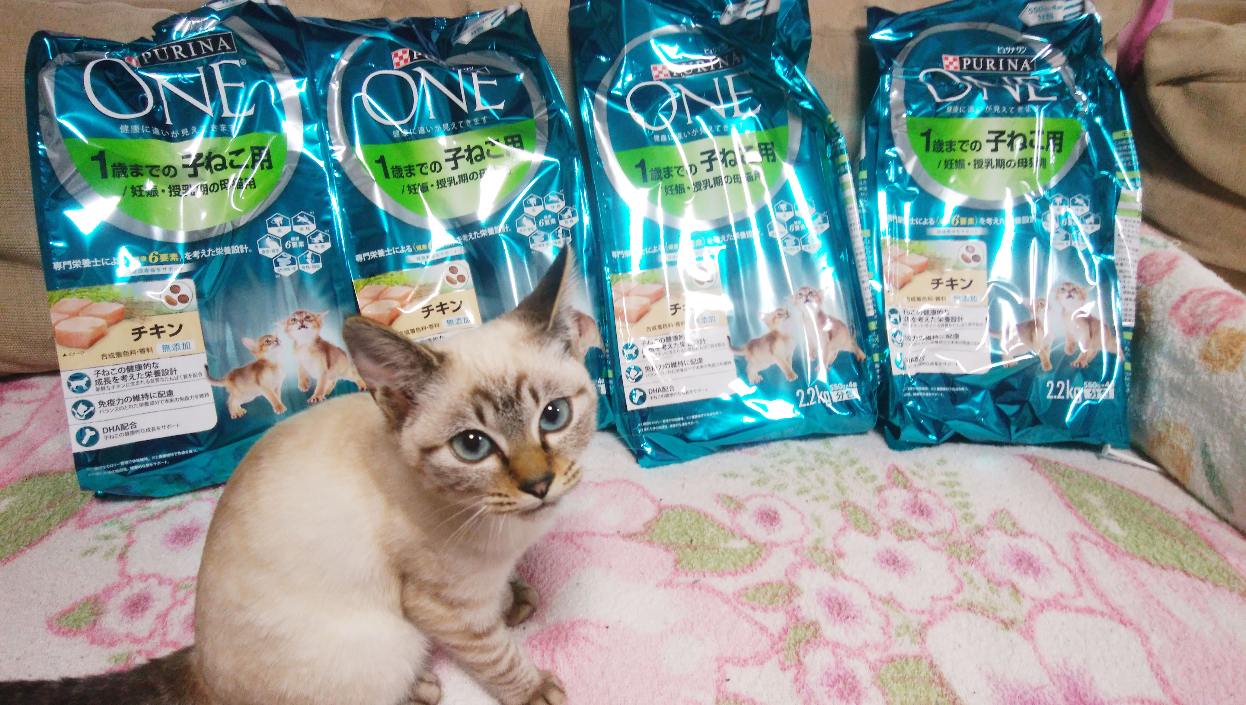 ねこの糸_保護猫.jpg