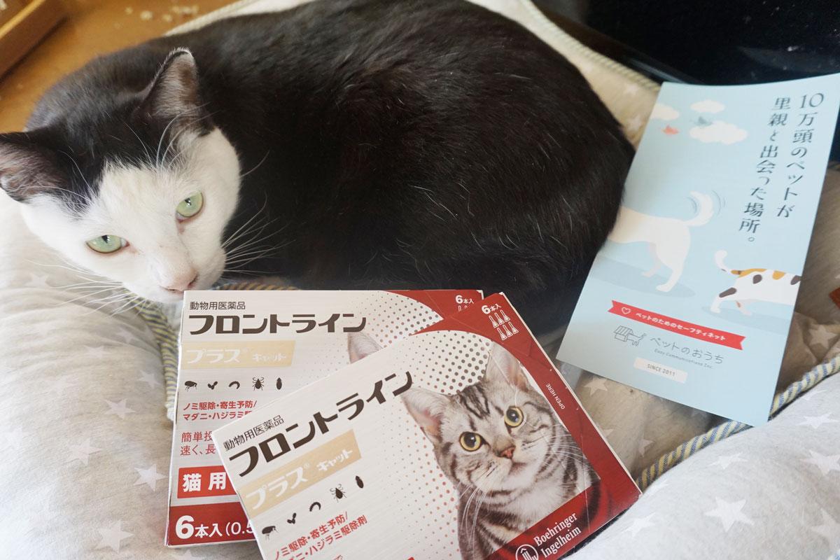 ねりまねこ8_保護猫.jpg