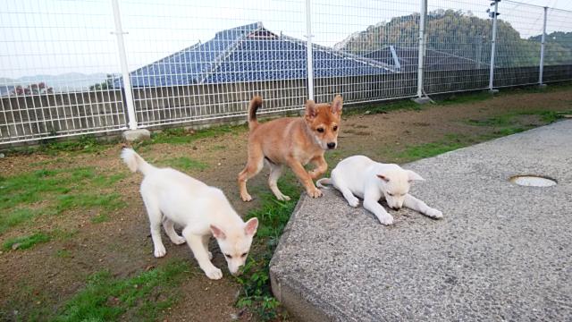 アニマルレスキュー-たんぽぽ_保護犬.png