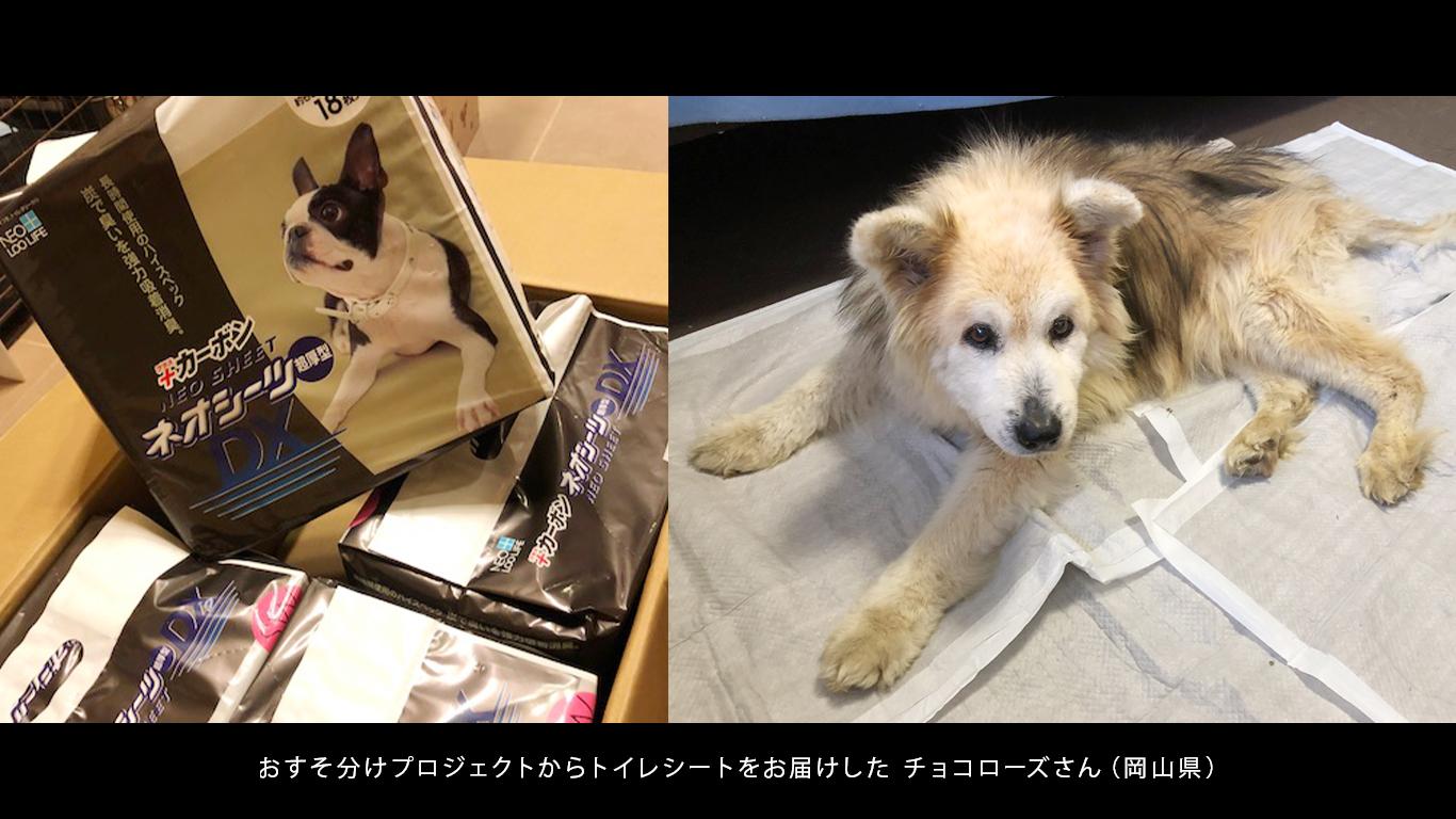 チョコローズ_保護犬.jpg