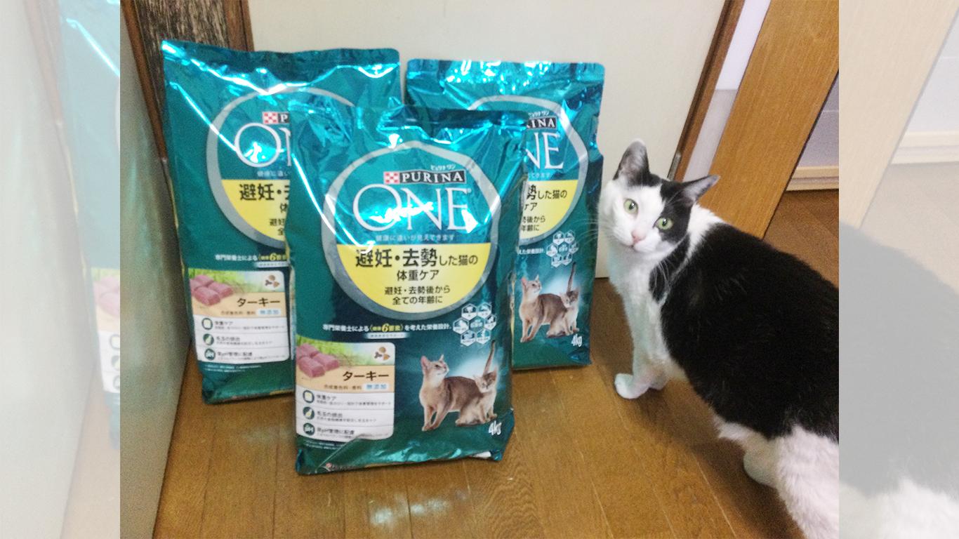 プーちゃん家の猫達と地域猫_40.jpg