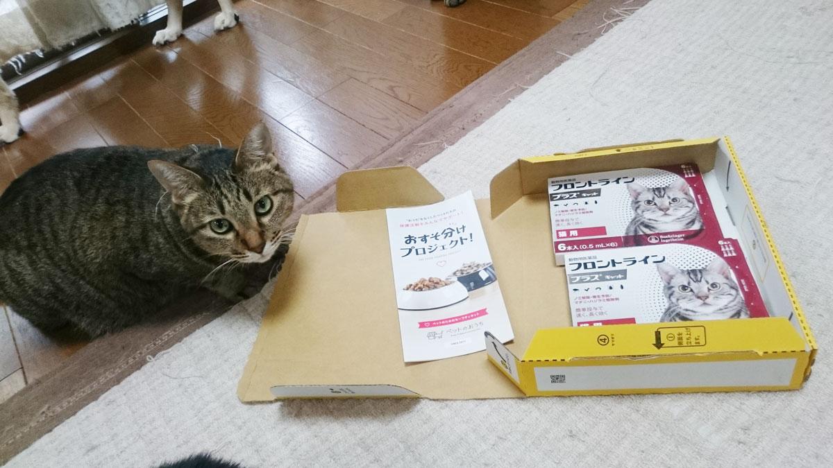ミントハウス1_保護猫.jpg
