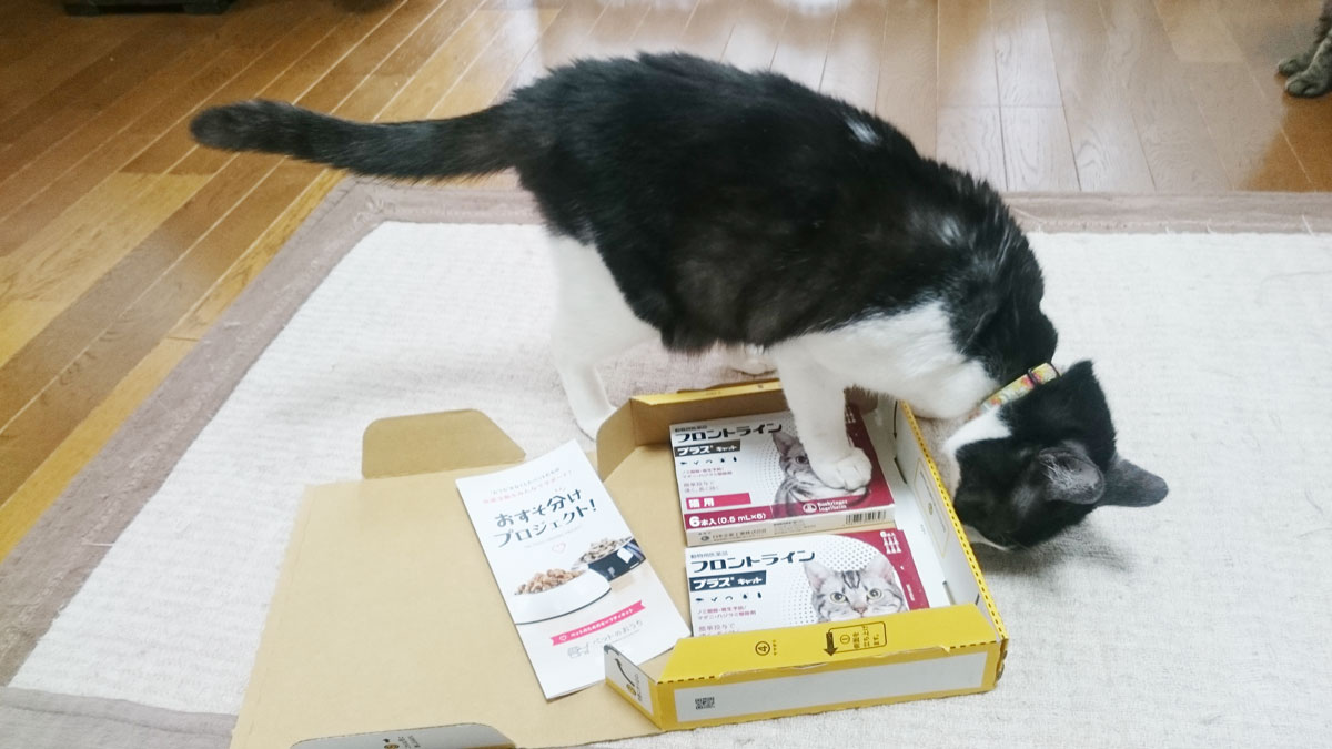 ミントハウス2_保護猫.jpg