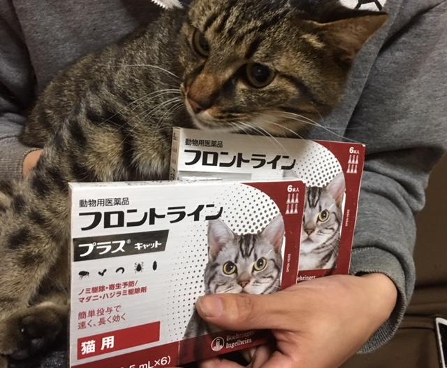 リックン2_保護猫.jpeg