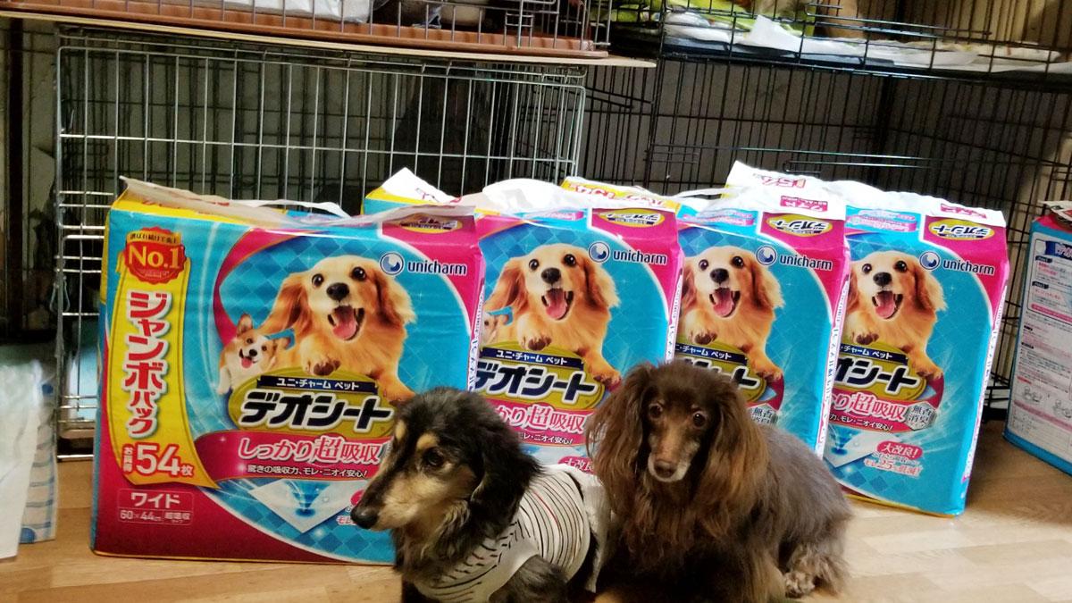 動物愛護団体happysmile_保護犬.jpg