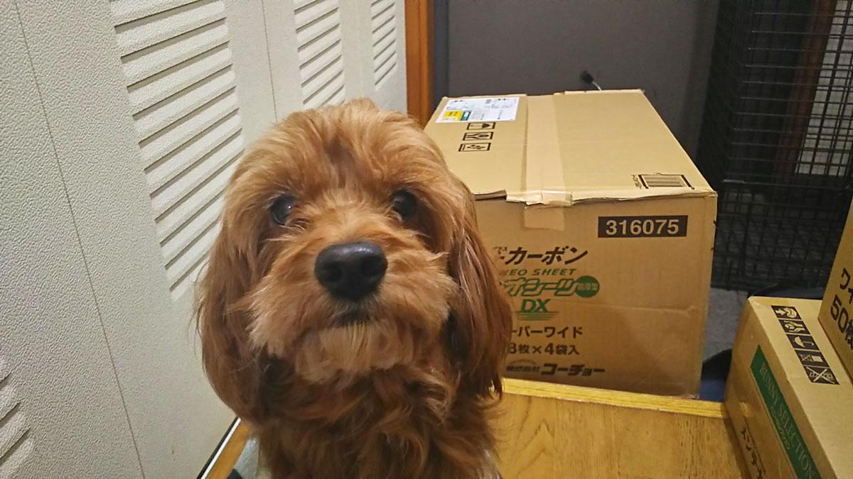 幸せ尻尾1_保護犬.jpg