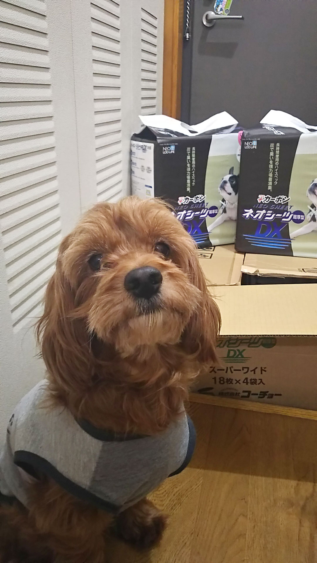 幸せ尻尾3_保護犬.jpg
