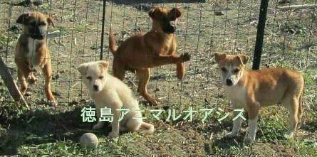 徳島アニマルオアシス_29-2.jpeg