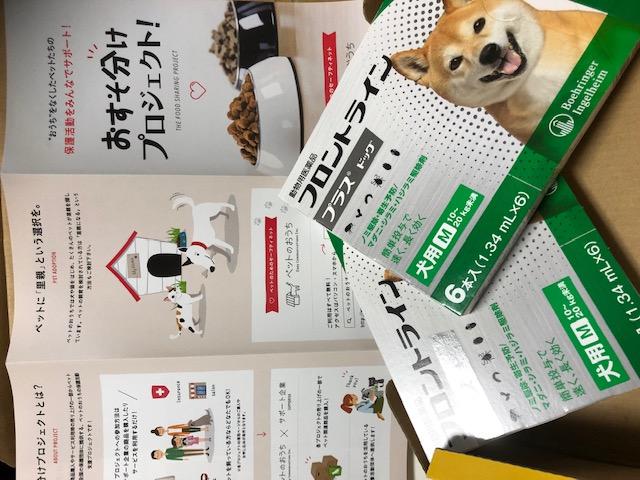 森にゃんこ1_駆虫薬.jpeg